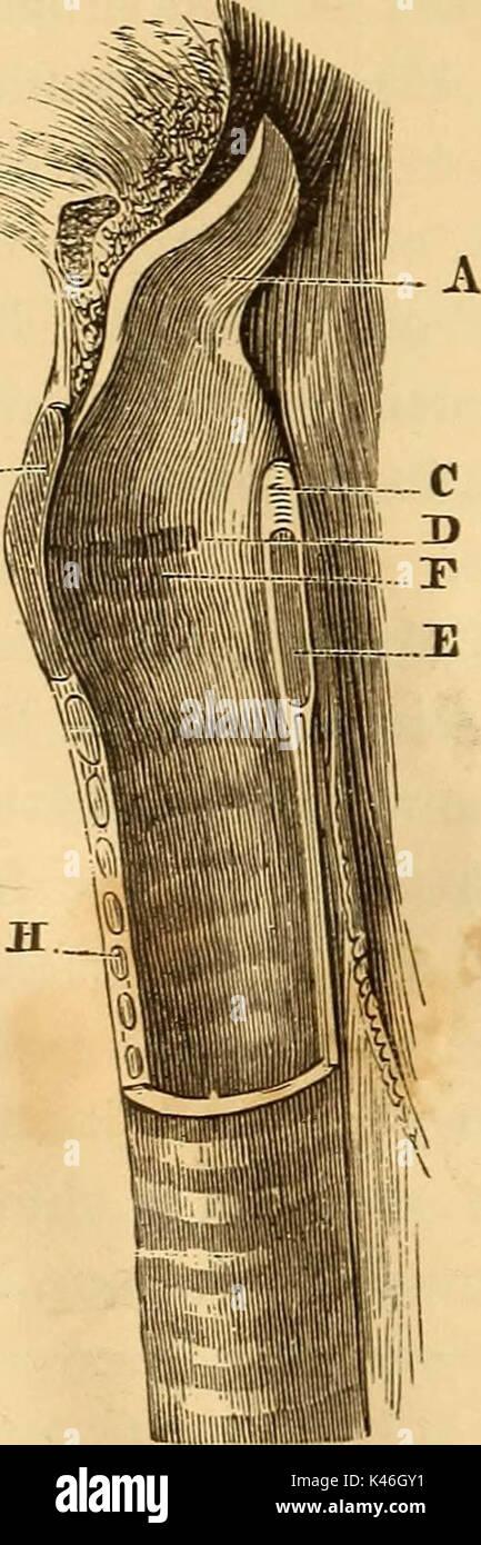 'Un traité sur la physiologie et l'hygiène pour les établissements d'enseignement et de lecteurs en général ..' (1887) Photo Stock