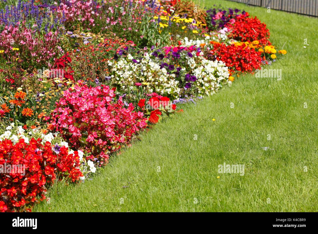 Image De Parterre De Fleurs parterre de fleurs d'été colorés avec blossomimg banque d
