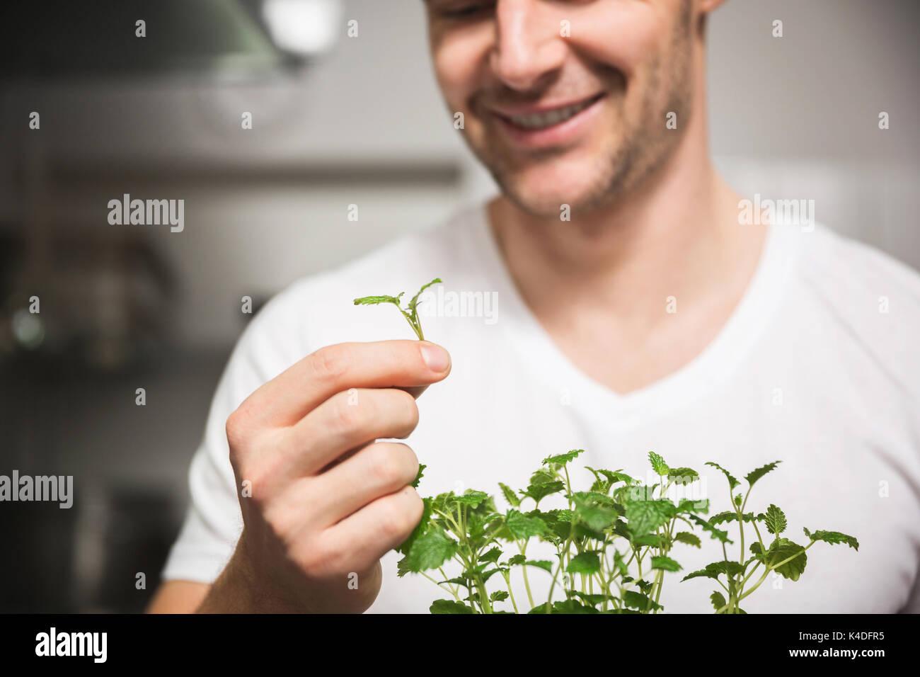 Cropped portrait of happy chef holding morceau de mélisse Photo Stock