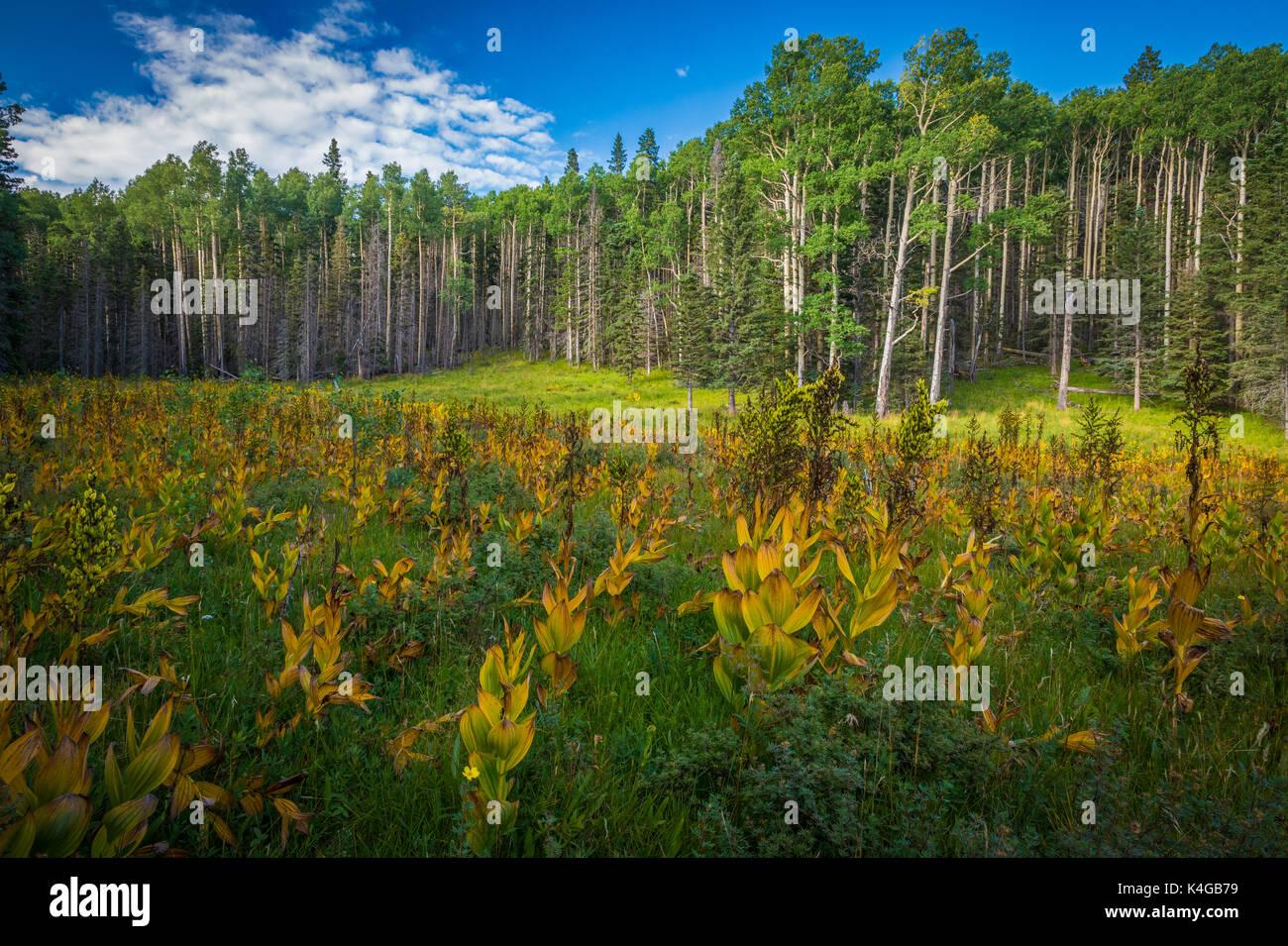 La nature sauvage Pecos est une zone naturelle protégée au sein de la Forêt Nationale de Santa Fe et Carson National Forest. Photo Stock