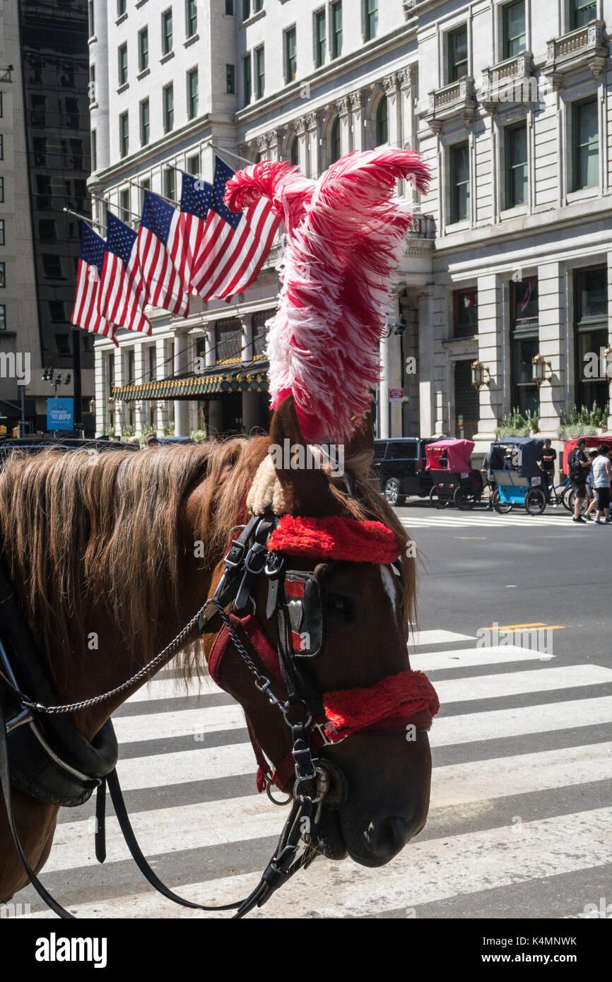 Transport cheval avec plumet rouge en face de la plaza, Cinquième Avenue, New York, USA Photo Stock