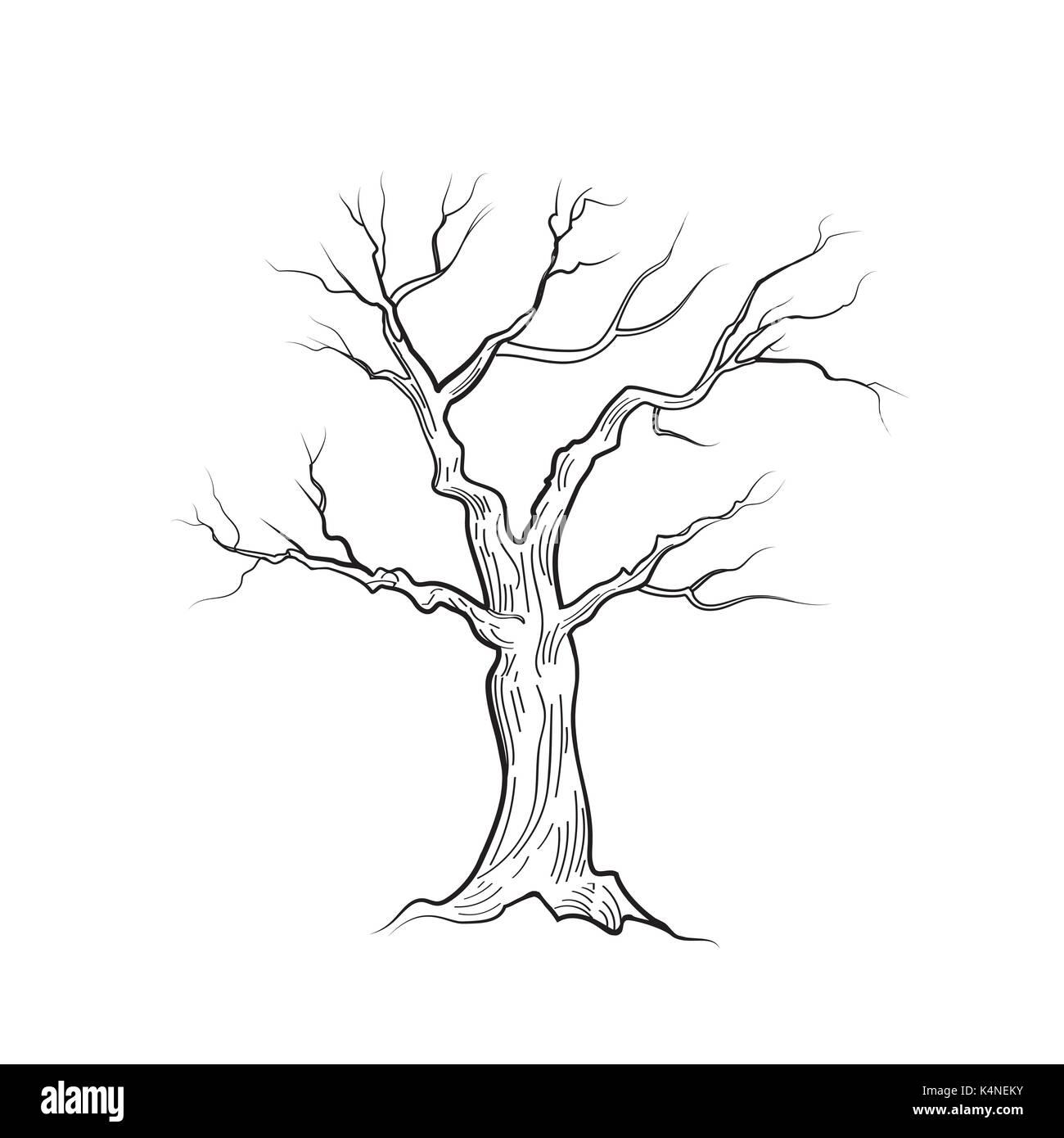arbre sans feuilles isolées. nature sign vector sketch vecteurs et