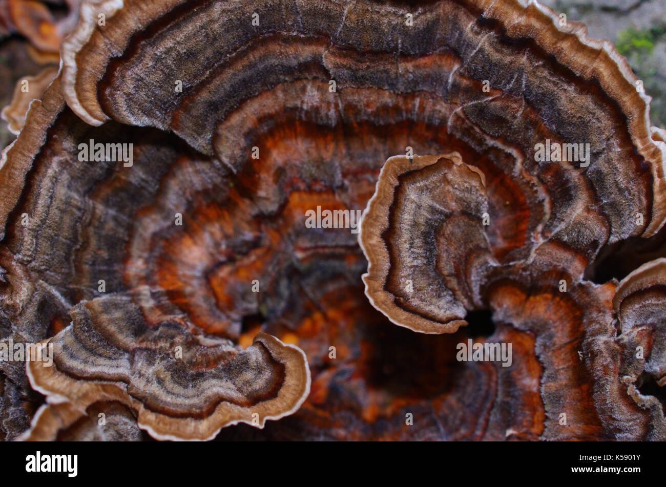 Mushroom macro photographie gros plan sur le sol forestier haut sol ... ef880507091