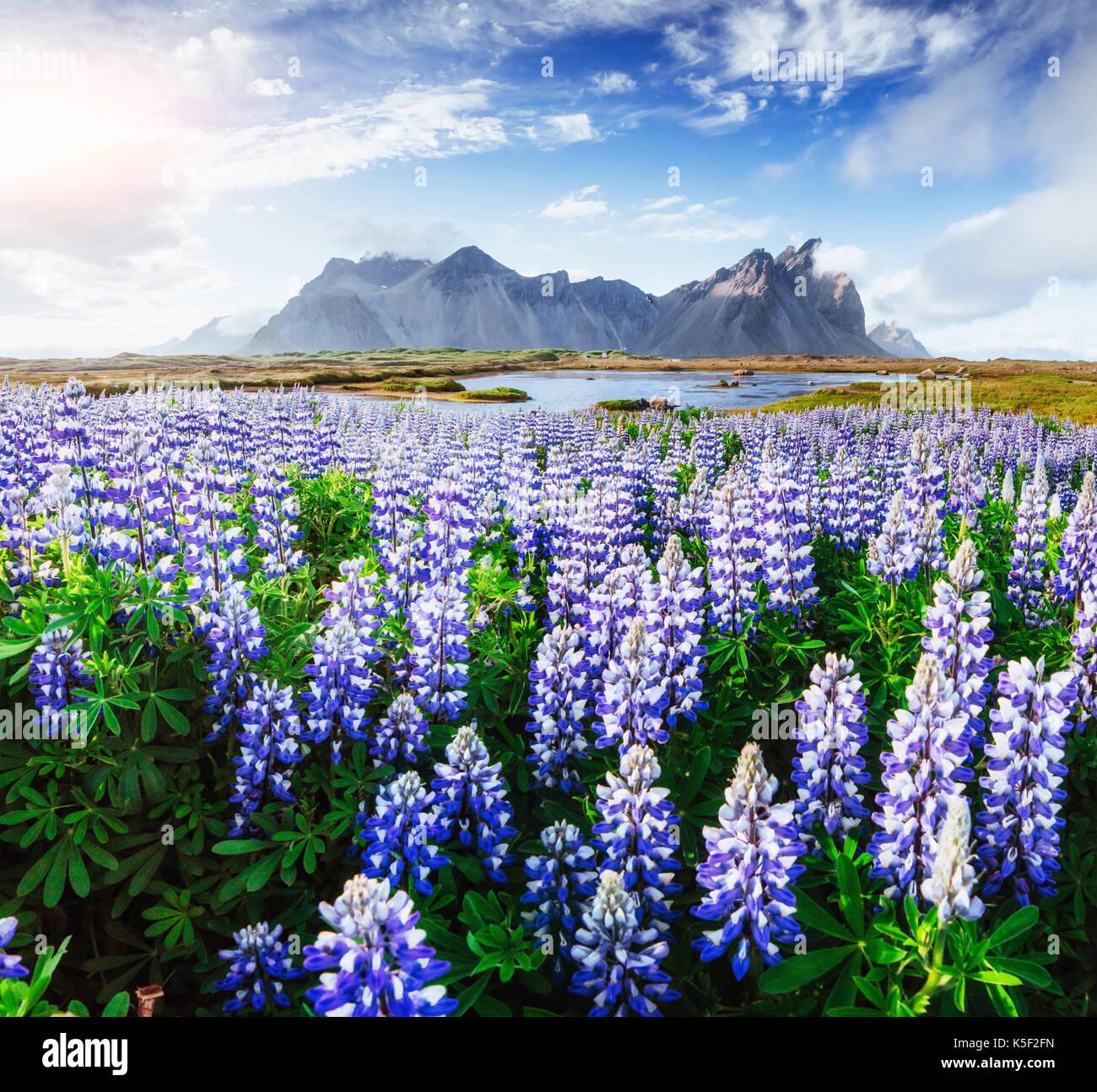 Une vue pittoresque sur le fleuve et les montagnes de l'islande Photo Stock