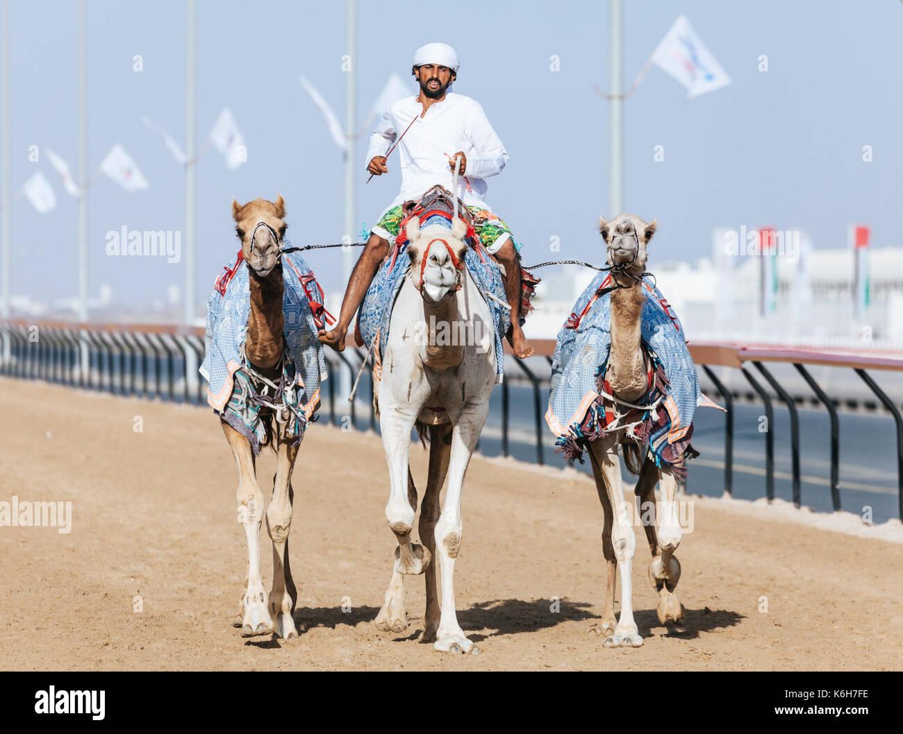Dubaï, Émirats Arabes Unis - Mars 25, 2016: pratique pour les courses de chameaux à chameau Dubai Racing Club, Al Marmoom, EAU Photo Stock