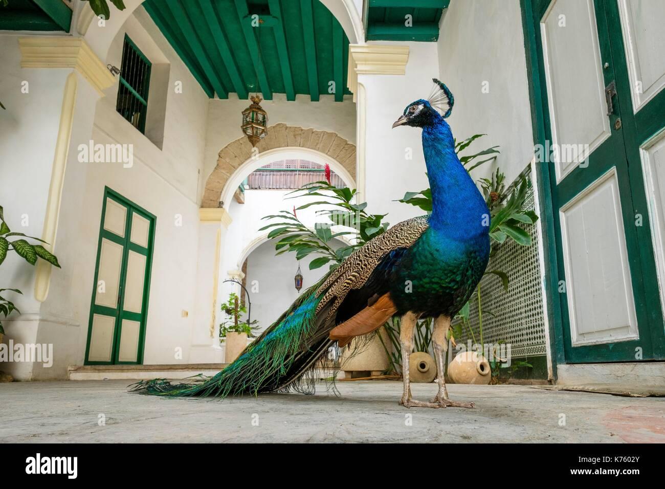 Cuba, La Havane, Habana Vieja (site du patrimoine mondial de l'UNESCO), Calle Oficios, la Casa de los Arabes, 17e siècle bâtiment colonial qui abrite un musée ethnographique Banque D'Images