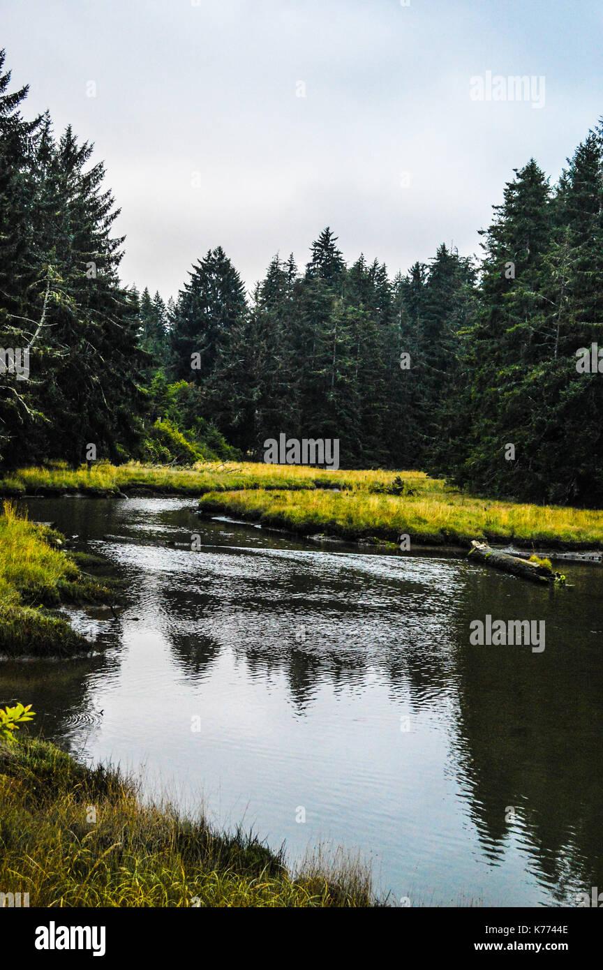 Cours d'eau à travers la forêt Photo Stock