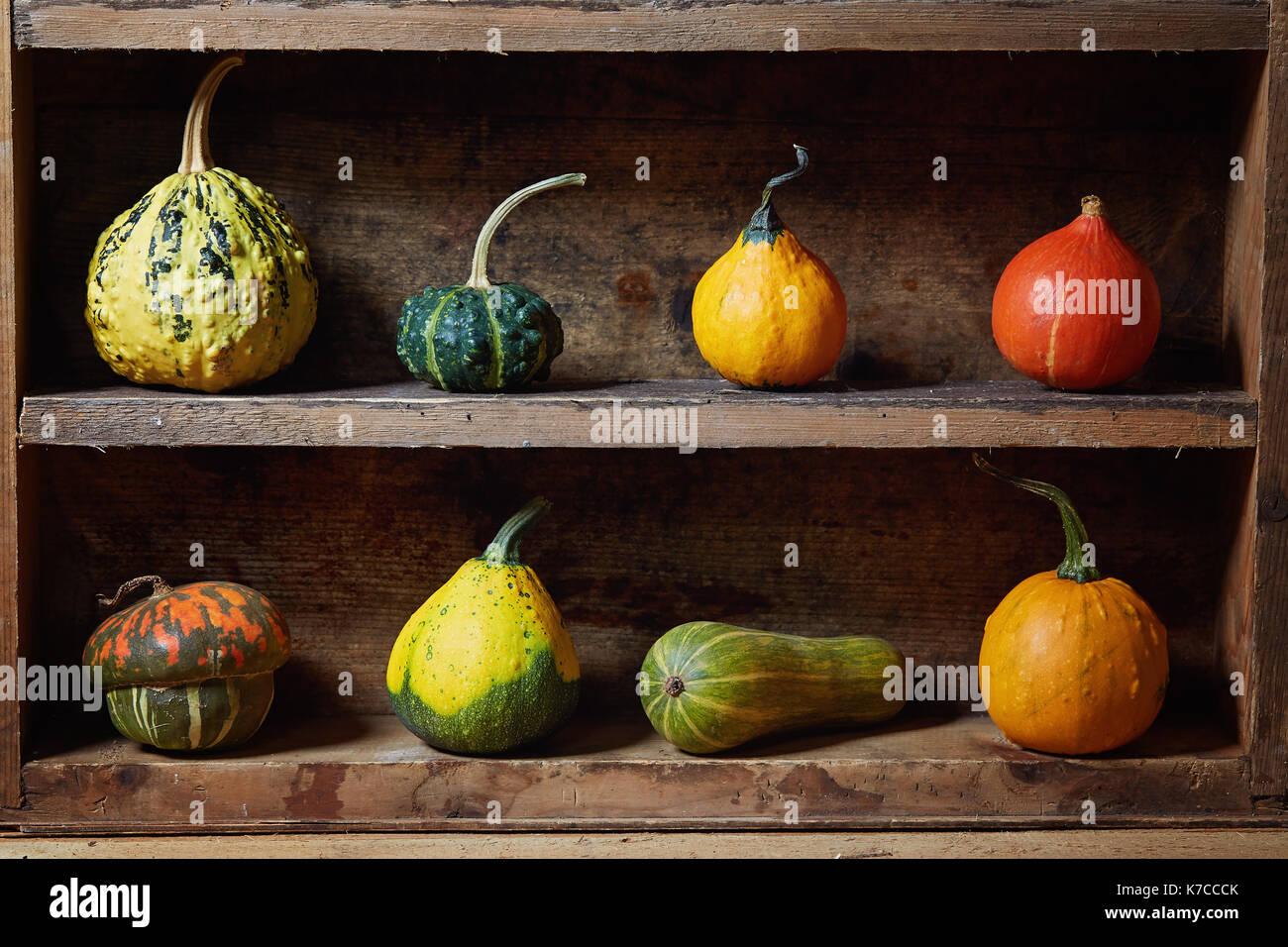 Assortiment de différents objets décoratifs et citrouilles comestibles sur la vieille planche en bois. still life with decorative gourd. Photo Stock