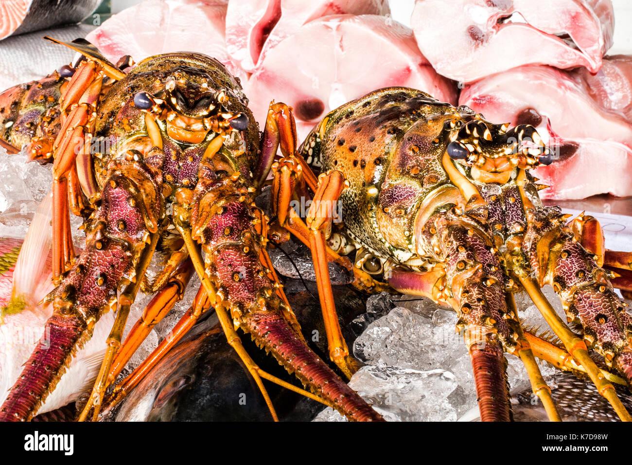 Close up de homards à vendre dans le marché aux poissons de ubatuba, une ville côtière à l'Etat de Sao Paulo. ubatuba, Etat de Sao Paulo, Brésil. Photo Stock
