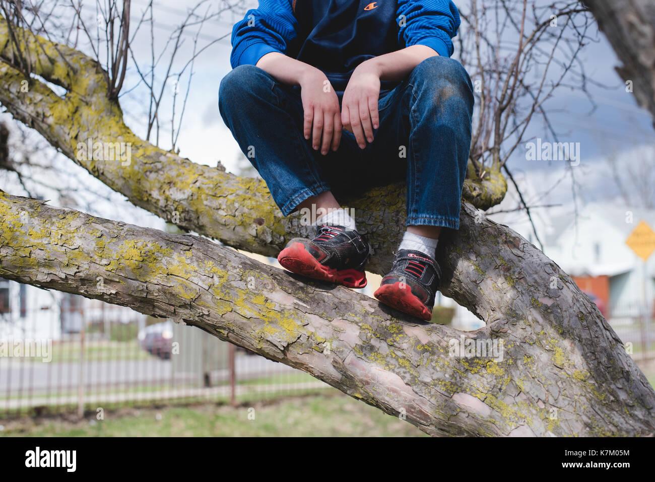 Garçon assis dans un arbre. Photo Stock