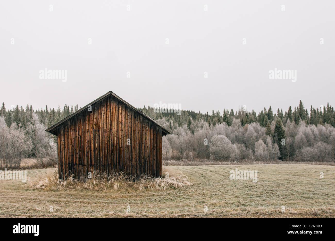 Vieille cabane dans les bois Photo Stock