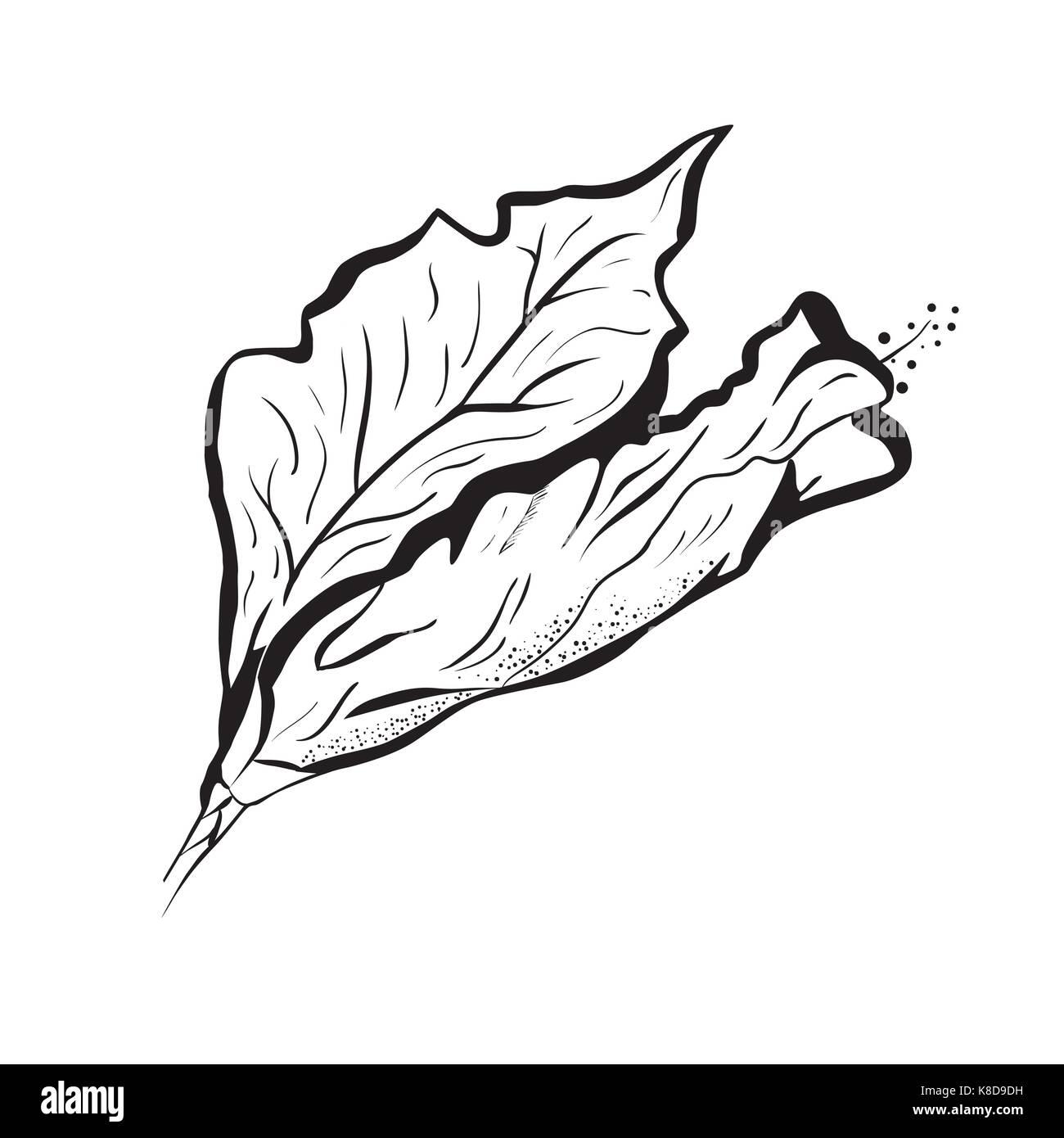 Fleur Dhibiscus Dans Un Style De Tatouage Le Noir Et Blanc