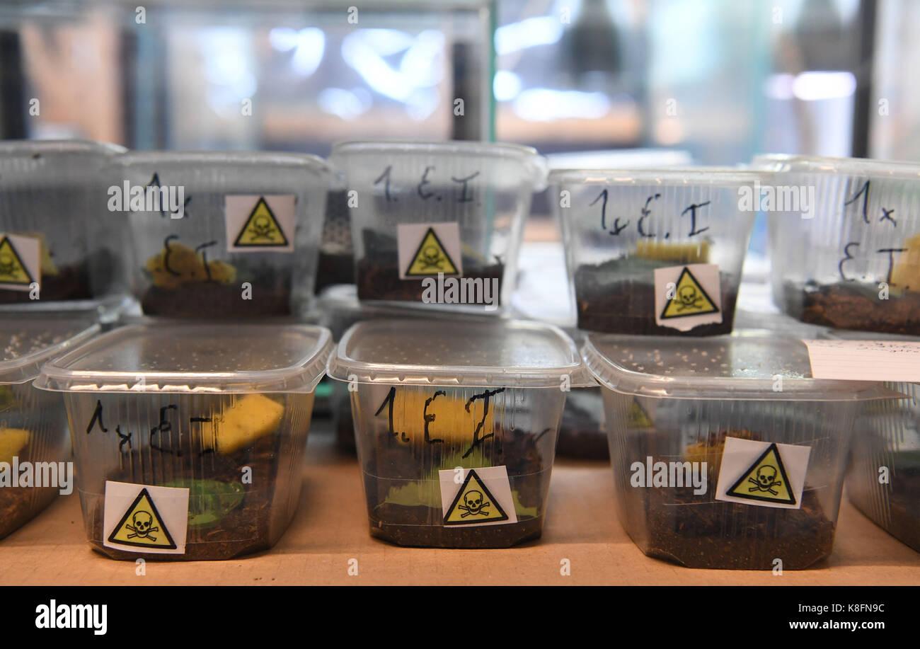 Berlin allemagne sep boîtes de bébés scorpion peut
