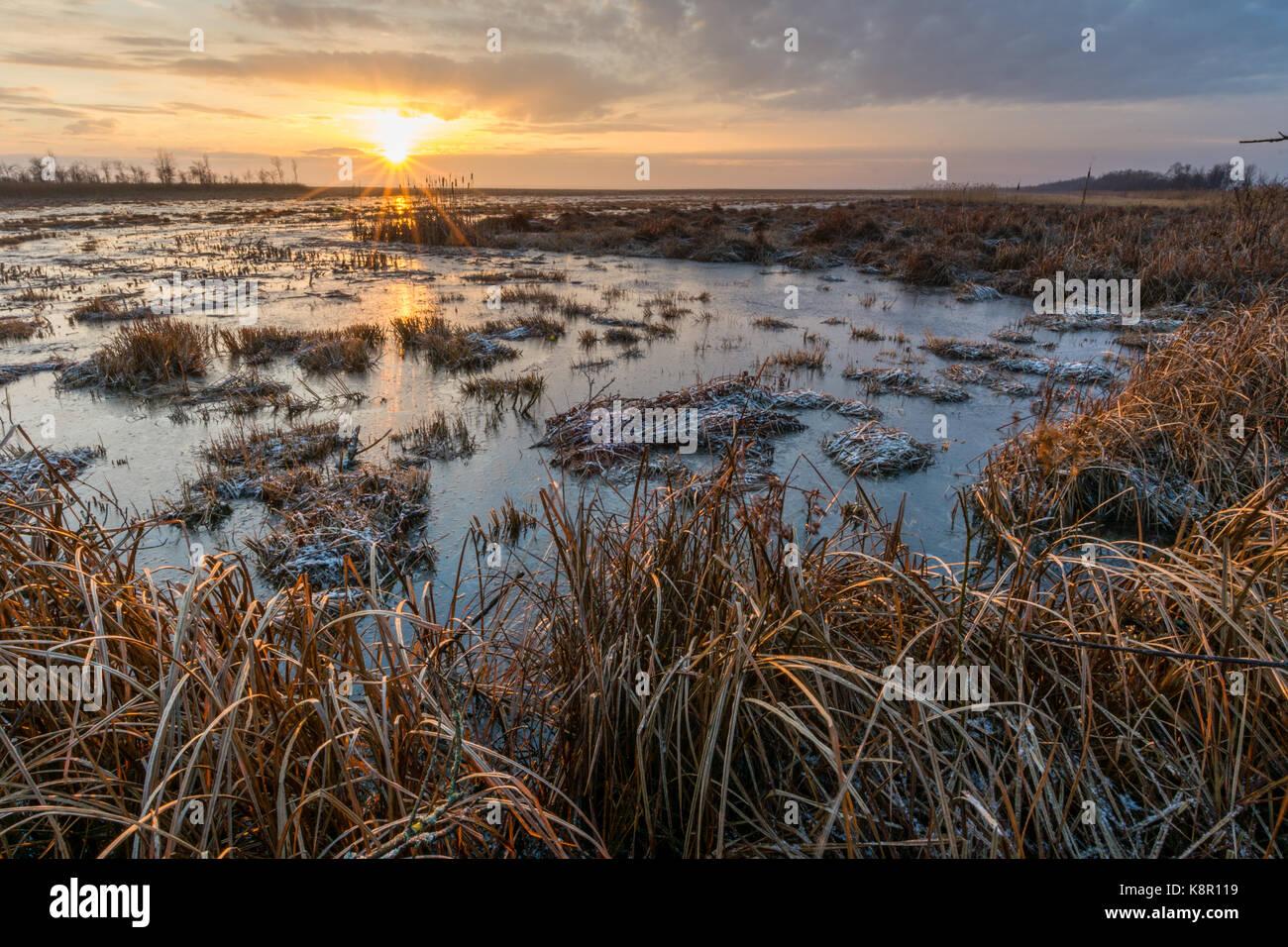 Inondées, marais couverts de givre, au lever du soleil, la Pologne, la Biebrza février Banque D'Images