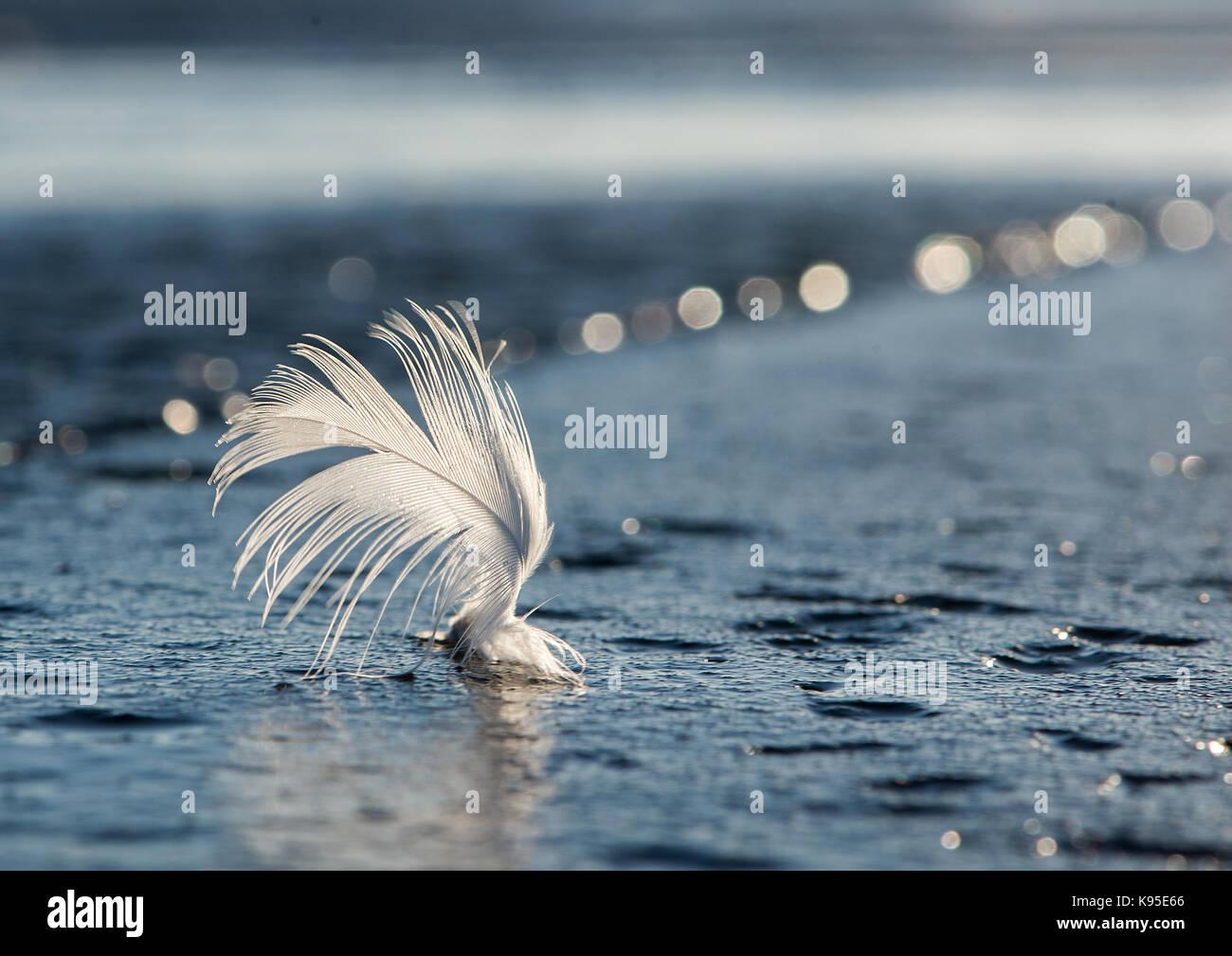 Plume d'oiseau sur la mer pier Photo Stock