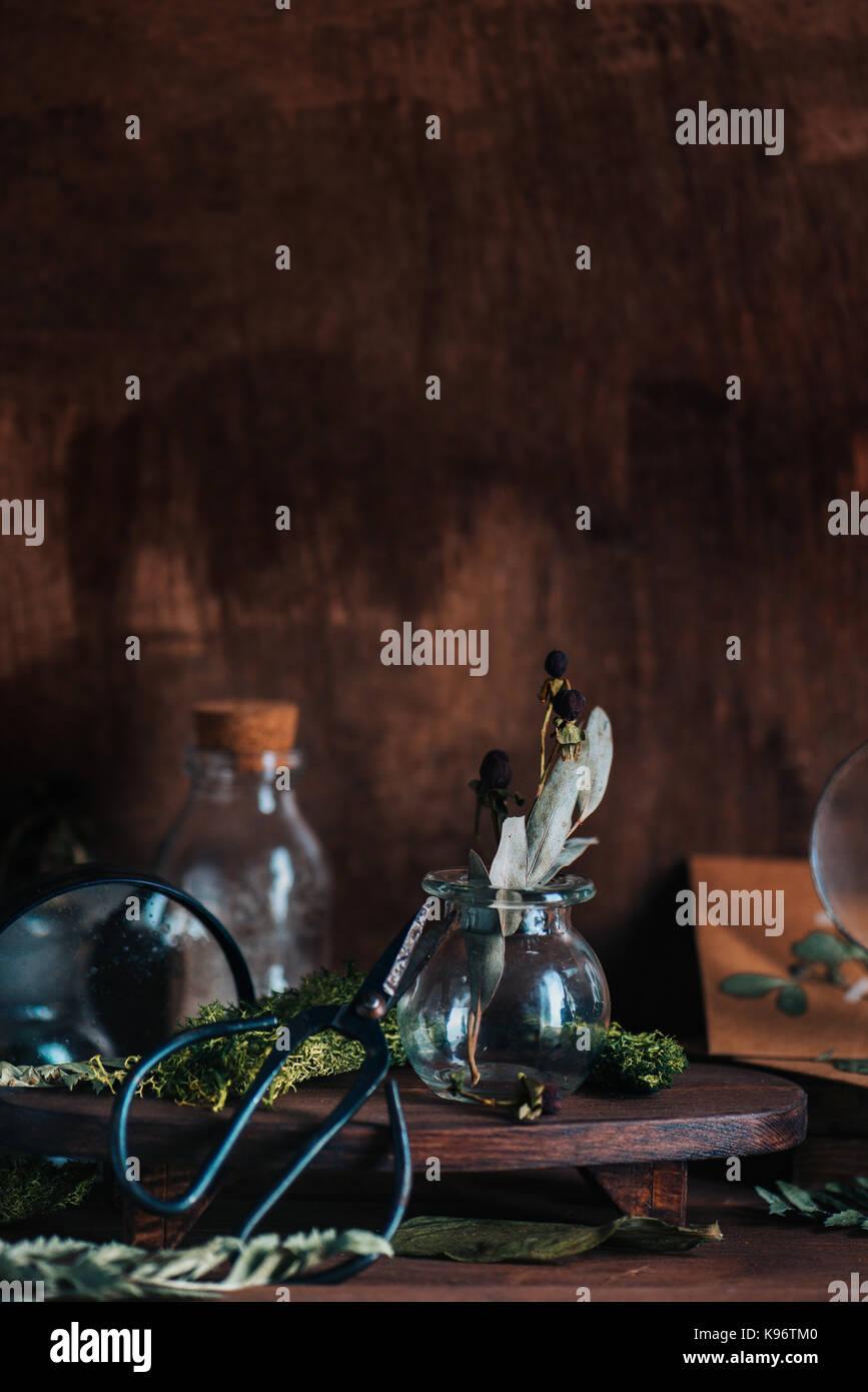 La vie encore chaud avec des pots de verre, loupe, ciseaux, les plantes séchées, de mousse et de l'artisanat Photo Stock