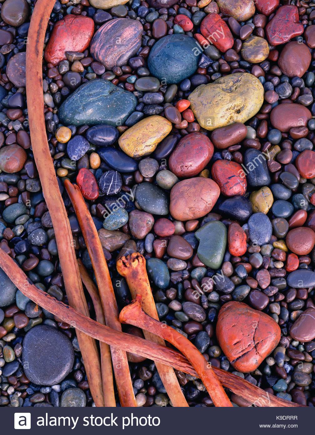 Plage de pierres et de varech, Sonoma Coast State Beach, Californie Photo Stock