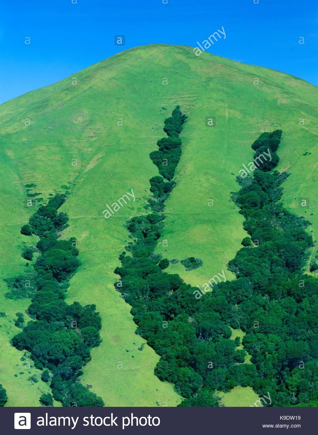 Montagne Noire au printemps, le comté de Marin, en Californie Photo Stock