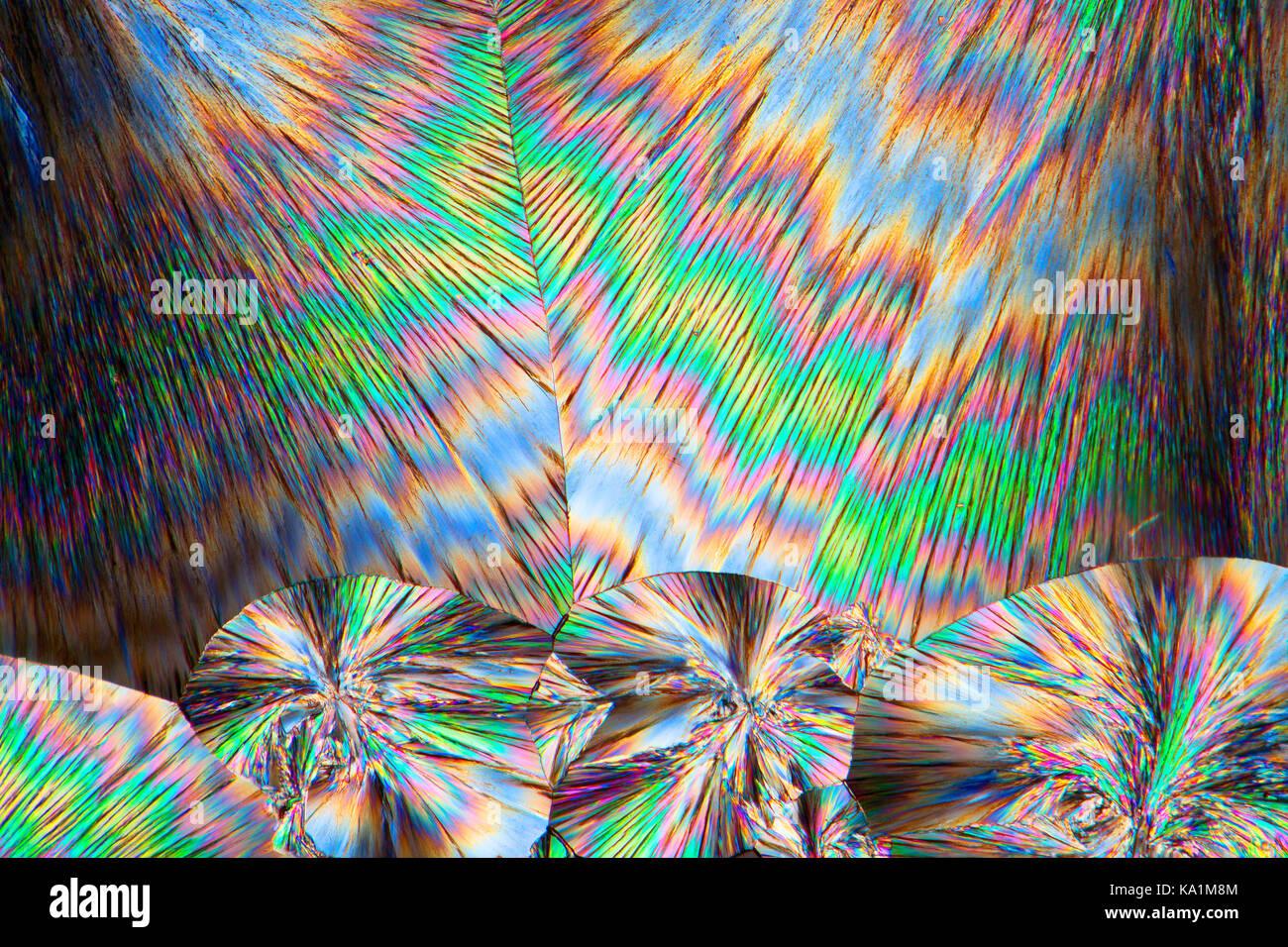 Cinchonidine microslide fondre, c'est un alcaloïde Cinchonidine Cinchona officinalis et dans Gongronema latifolium, microphotographie à polarisation croisée. Banque D'Images