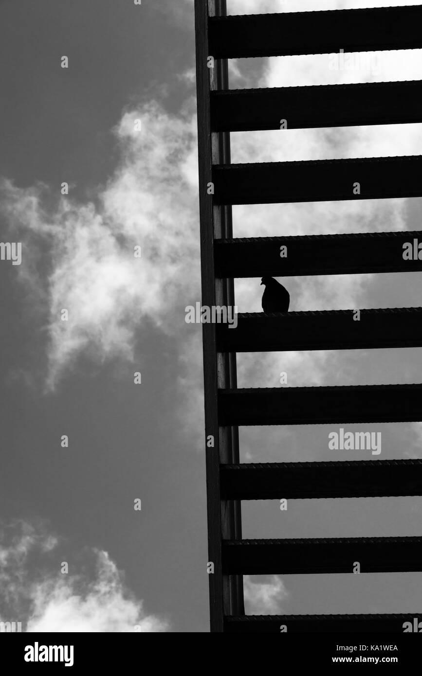 Stairway To Heaven Pigeon, San Francisco, 2013 Photo Stock