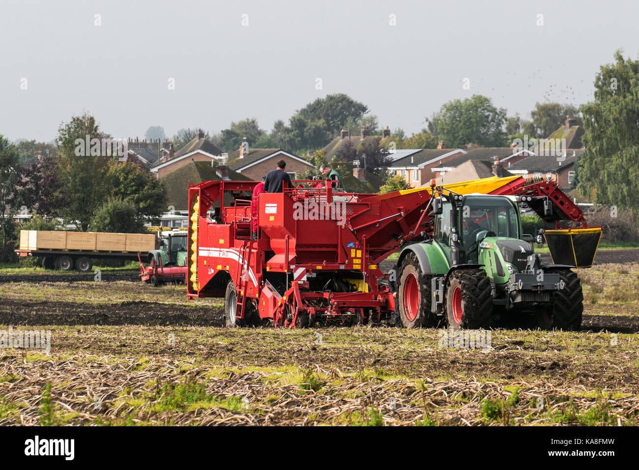 Hesketh Bank, Lancashire. Météo britannique. 26 Septembre, 2017. Conditions de fine avec une récolte de pommes de terre automatique Grimme Allemand SV 260 récolteuse. Les journées chaudes, nuits fraîches, et un sol bien drainé sont des conditions idéales pour la culture des meilleures pommes de terre. Dans le nord l'espace de stockage principal sont récoltés en septembre, quand les jours sont de plus cool et avant le premier gel. Credit: MediaWorldImages/Alamy Live News Banque D'Images