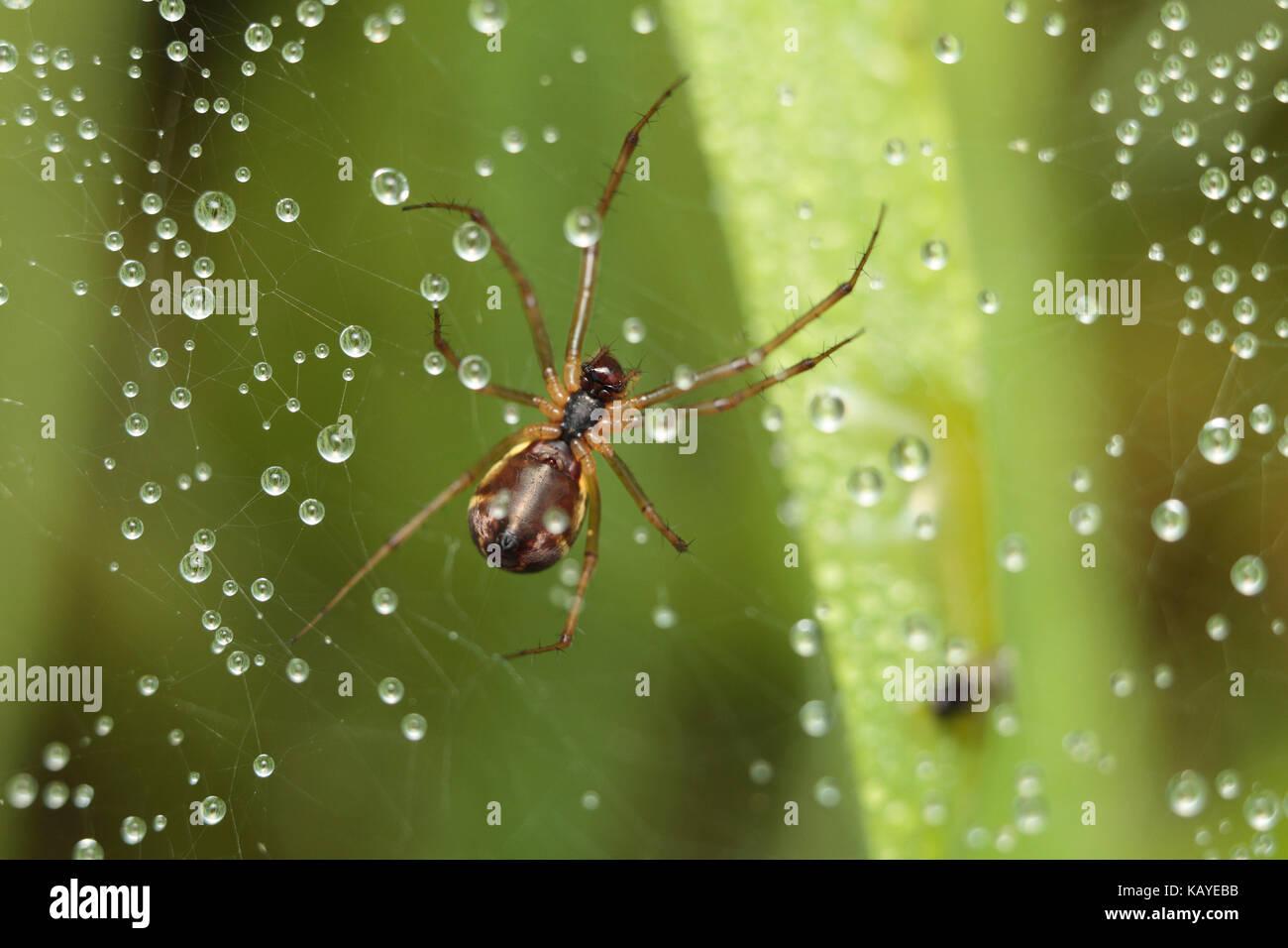 Orb Spider web Banque D'Images