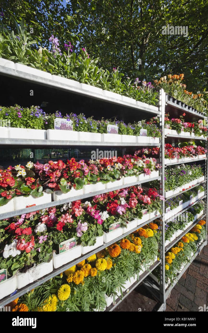 L'Angleterre, Londres, Columbia Road Flower Market, Photo Stock