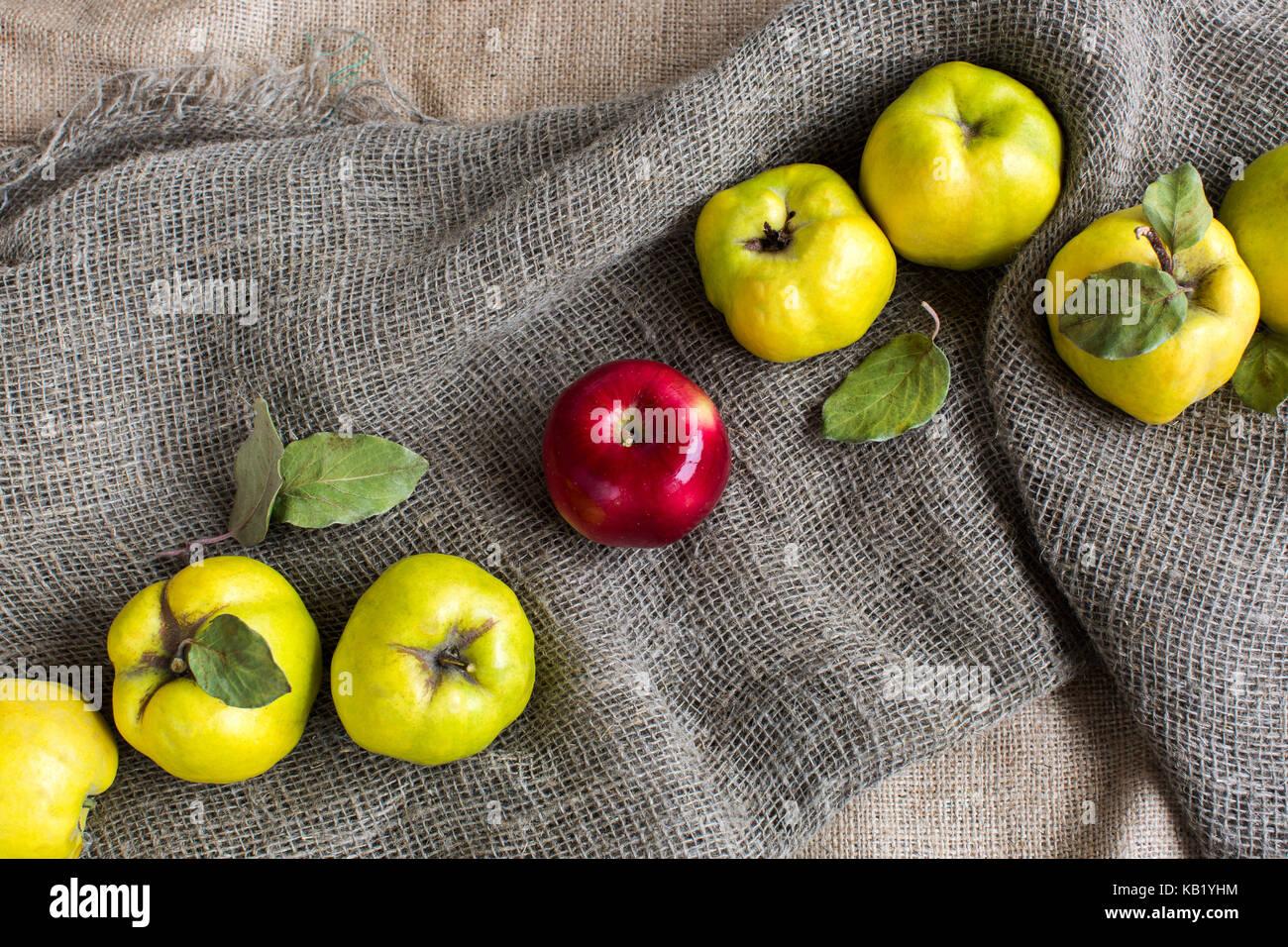 L'alimentation, la religion, le mode de vie sain concept. sur le tissu texturé gris entre les coings jaune Photo Stock
