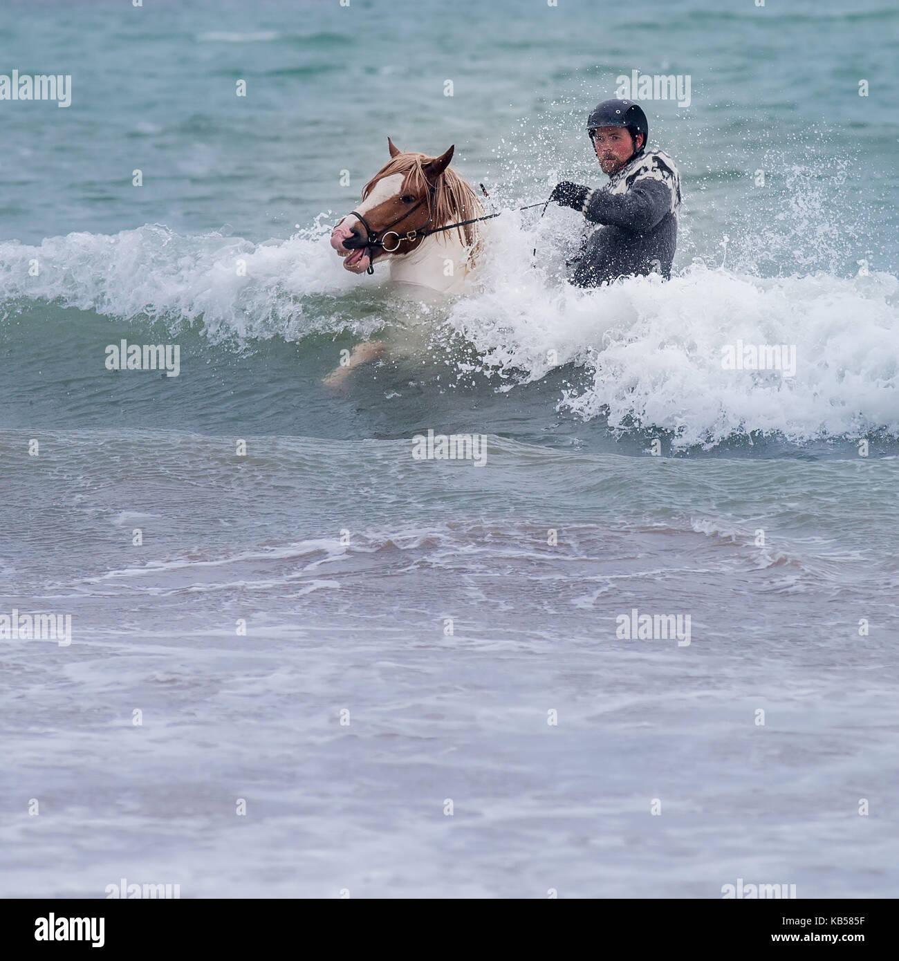 L'équitation de la mer, de l'Islande Icelandic Horse and Rider à longufjorur Beach, péninsule Photo Stock
