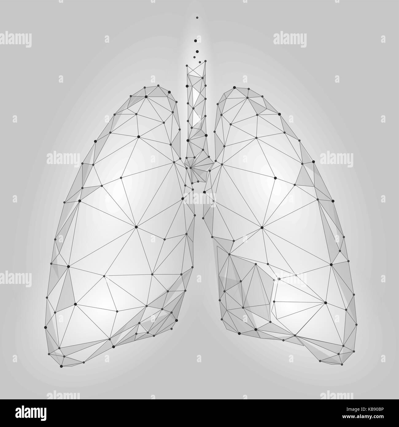 les droits de l'organe interne poumons. low poly technologie