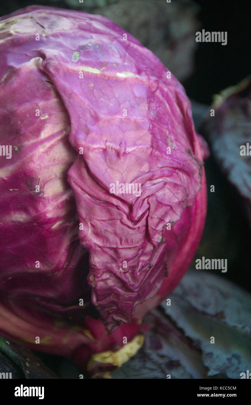 Chou rouge chou cole rouge marché de producteurs de légumes biologiques frais Photo Stock