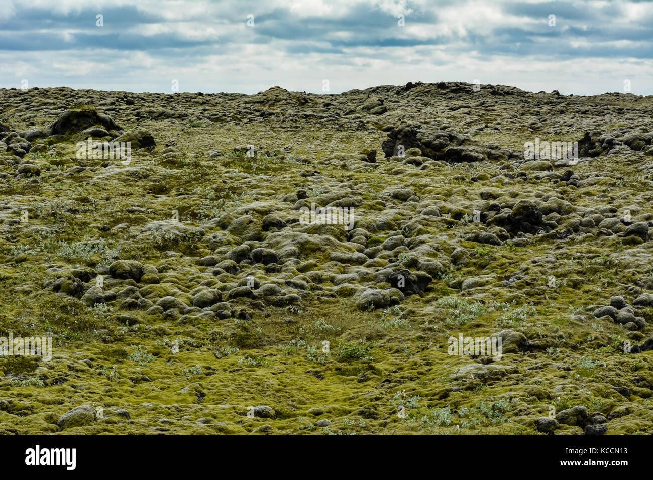 Vue typique dans le sud de l'Islande avec des roches de lave couvertes par mousse verte Photo Stock
