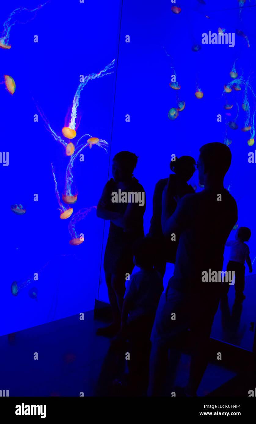 L'aquarium ripley Toronto, Toronto Photo Stock