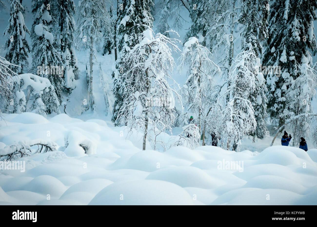 Paysage arctique en Laponie Finlande Banque D'Images