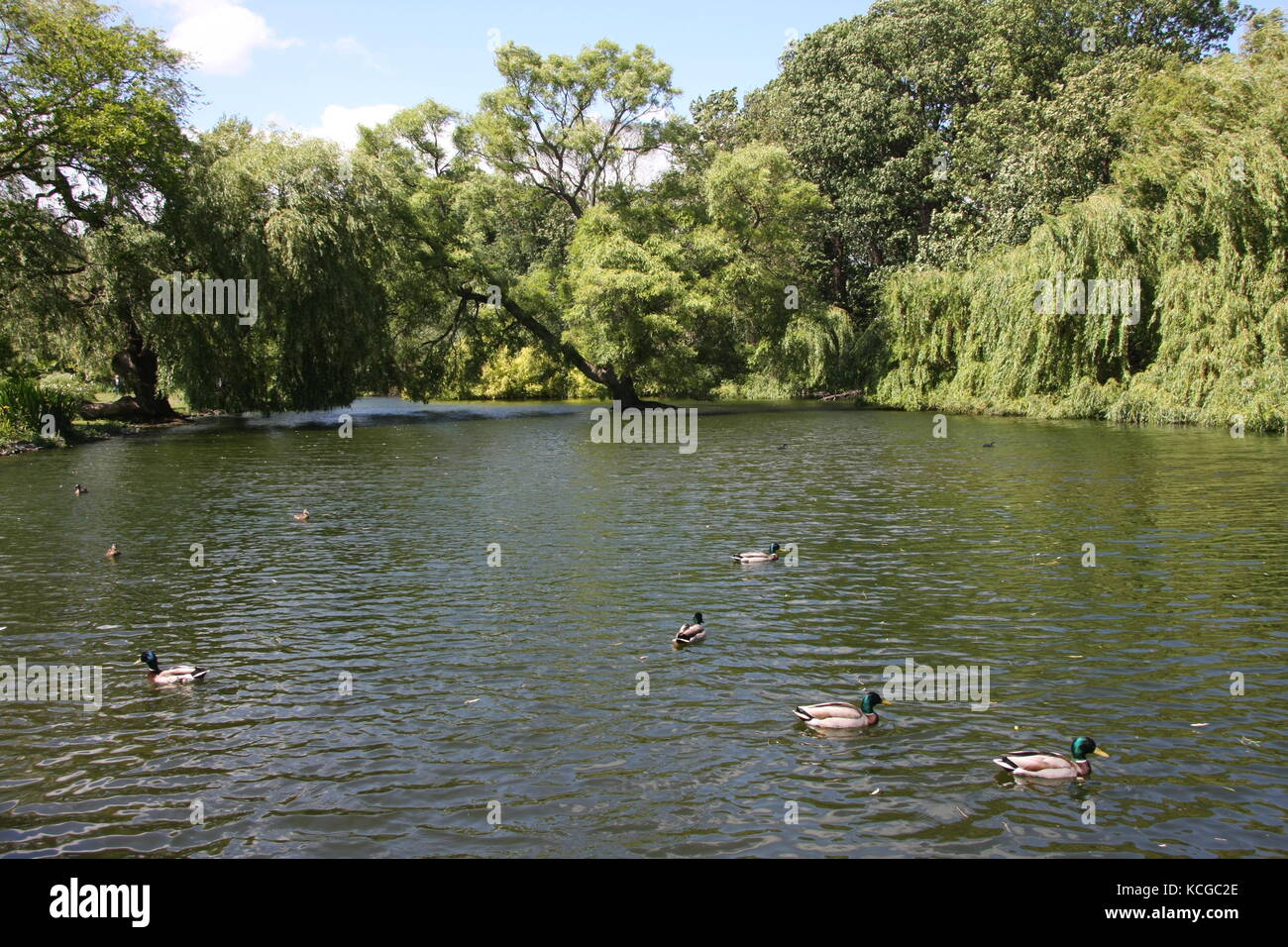 Vue sur les jardins de Thwaite Hall à Cottingham, dans le Yorkshire de l'est Banque D'Images