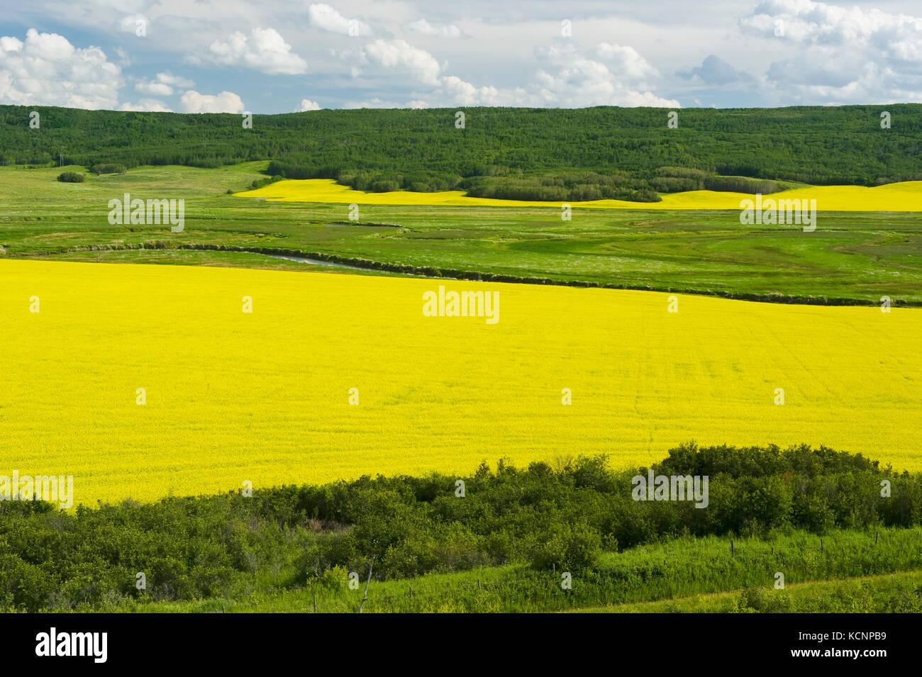 Collines érodées et les terres agricoles de fleurs de canola, la vallée de la rivière Qu'Appelle, Photo Stock