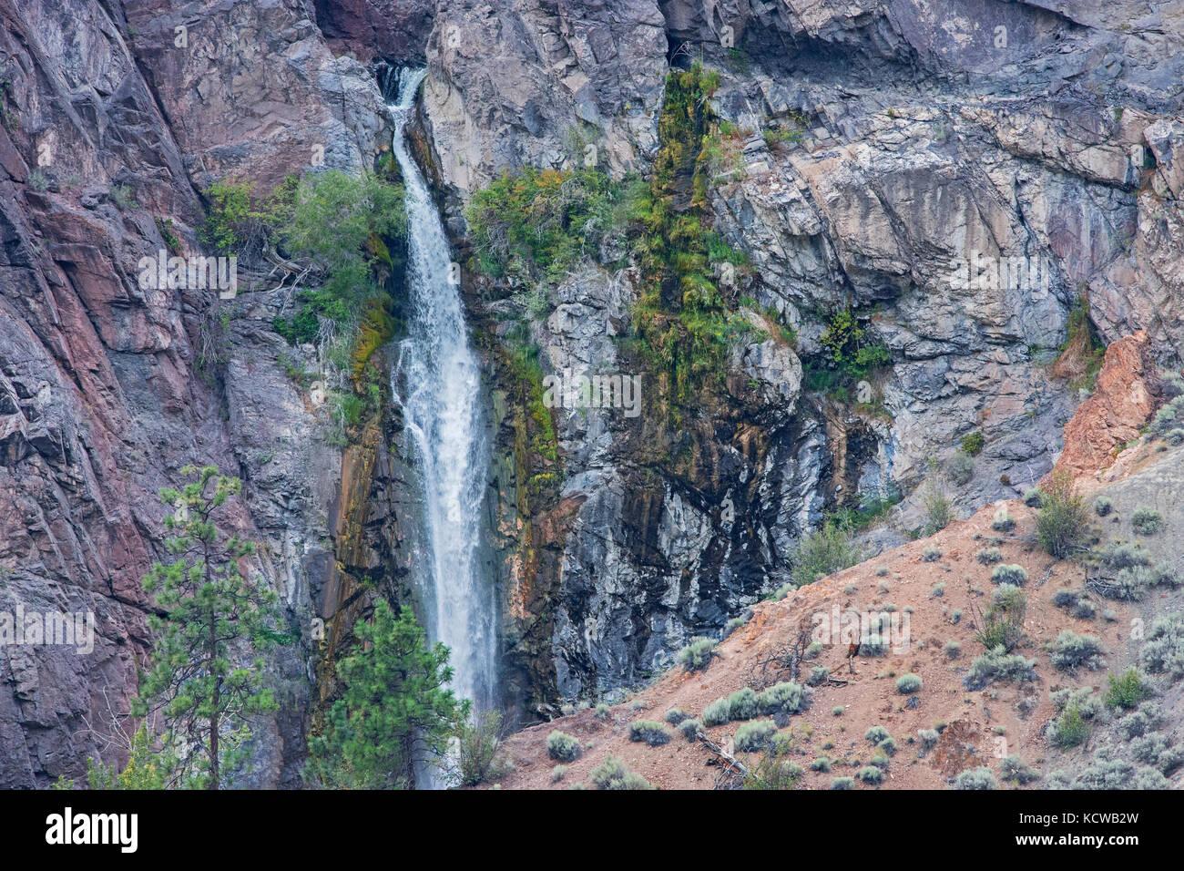 Les murs de canyon avec des pins, Lytton, Colombie-Britannique, Canada Banque D'Images