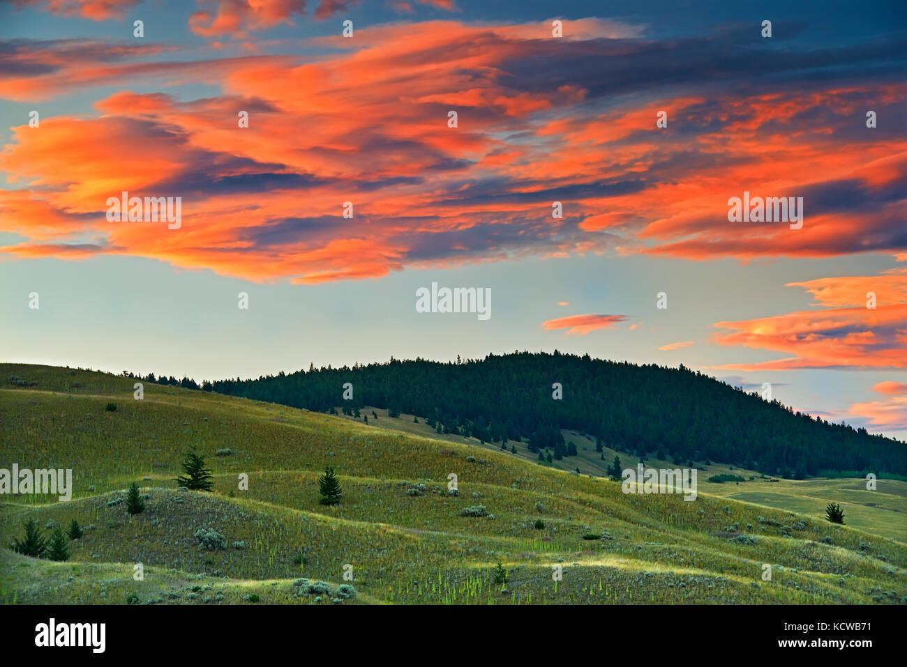 L'écosystème des prairies, Kamloops, Colombie-Britannique, Canada Photo Stock
