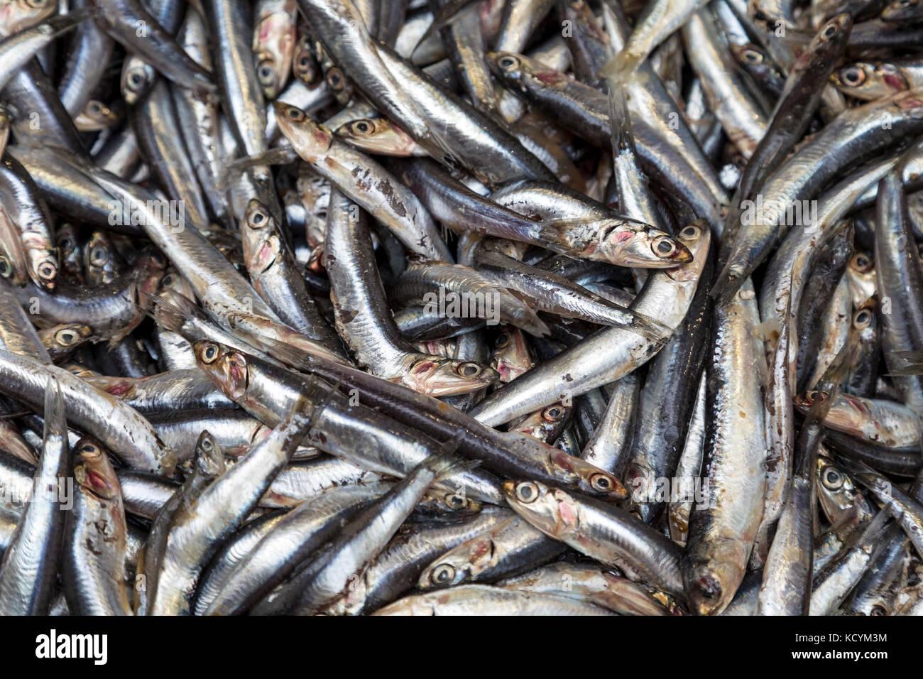 Sardines en vente sur le marché au poisson de Vieux Port, Marseille, France Photo Stock