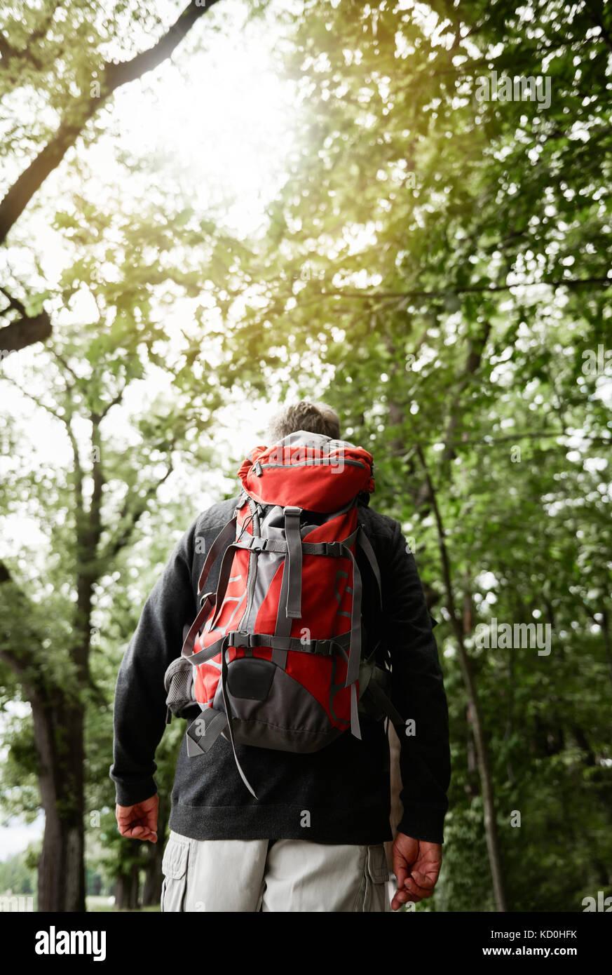 Hauts homme marchant dans la forêt, transportant un sac à dos, vue arrière Photo Stock