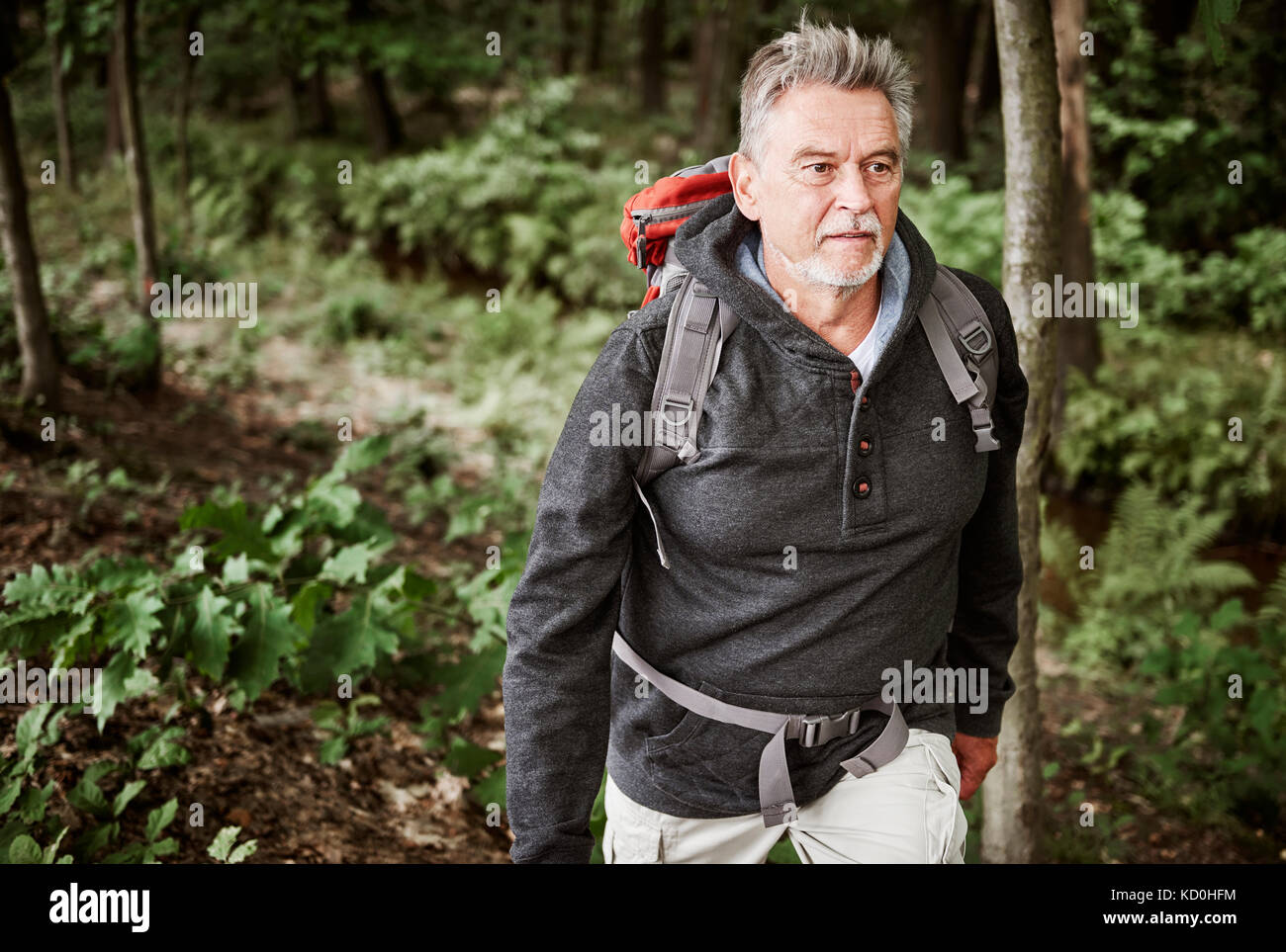 Man de la randonnée à travers forêt Photo Stock