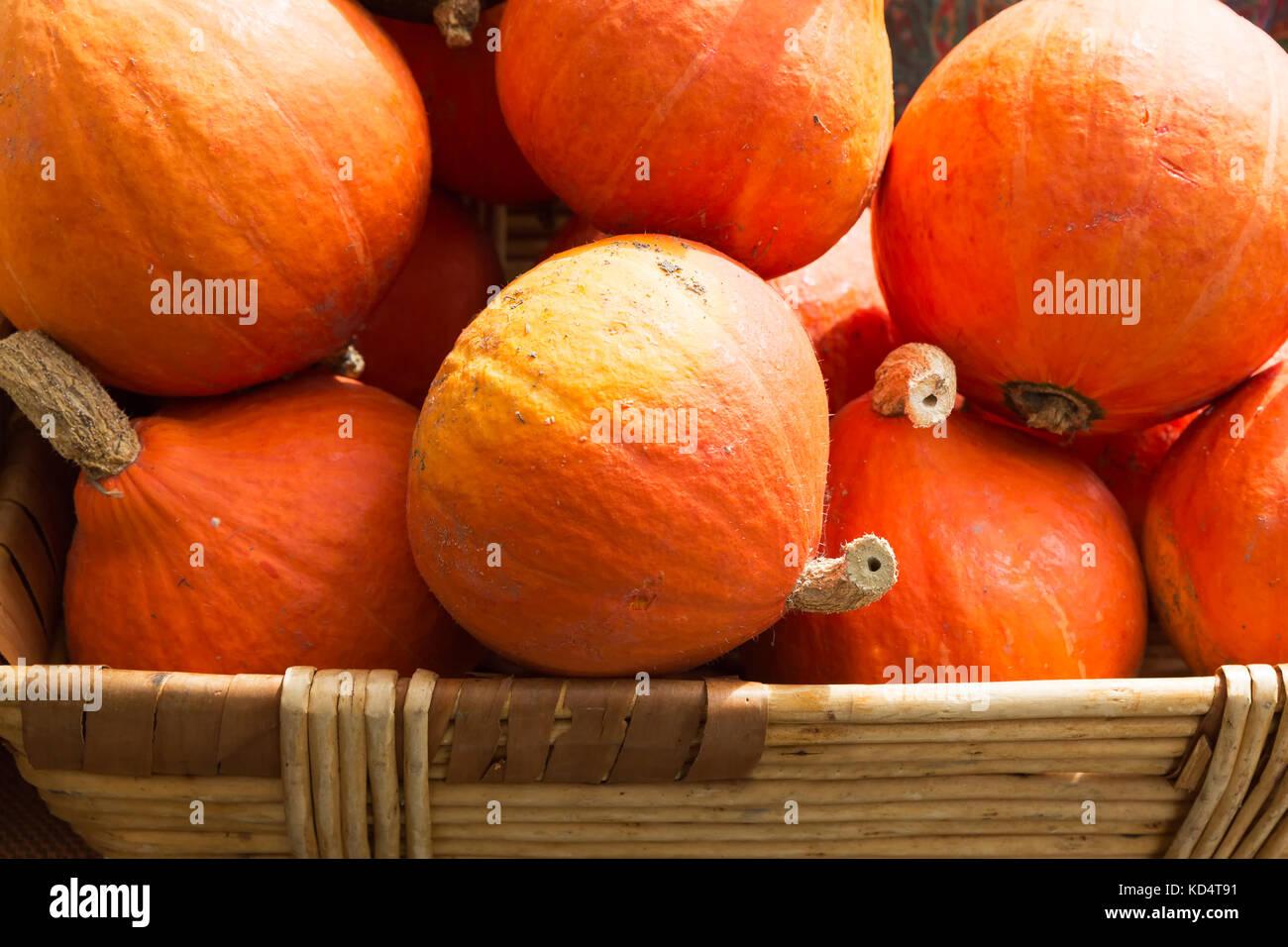 Courges citrouille dans un panier à vendre à un marché de producteurs. close up de ce légume biologique. concept: Banque D'Images