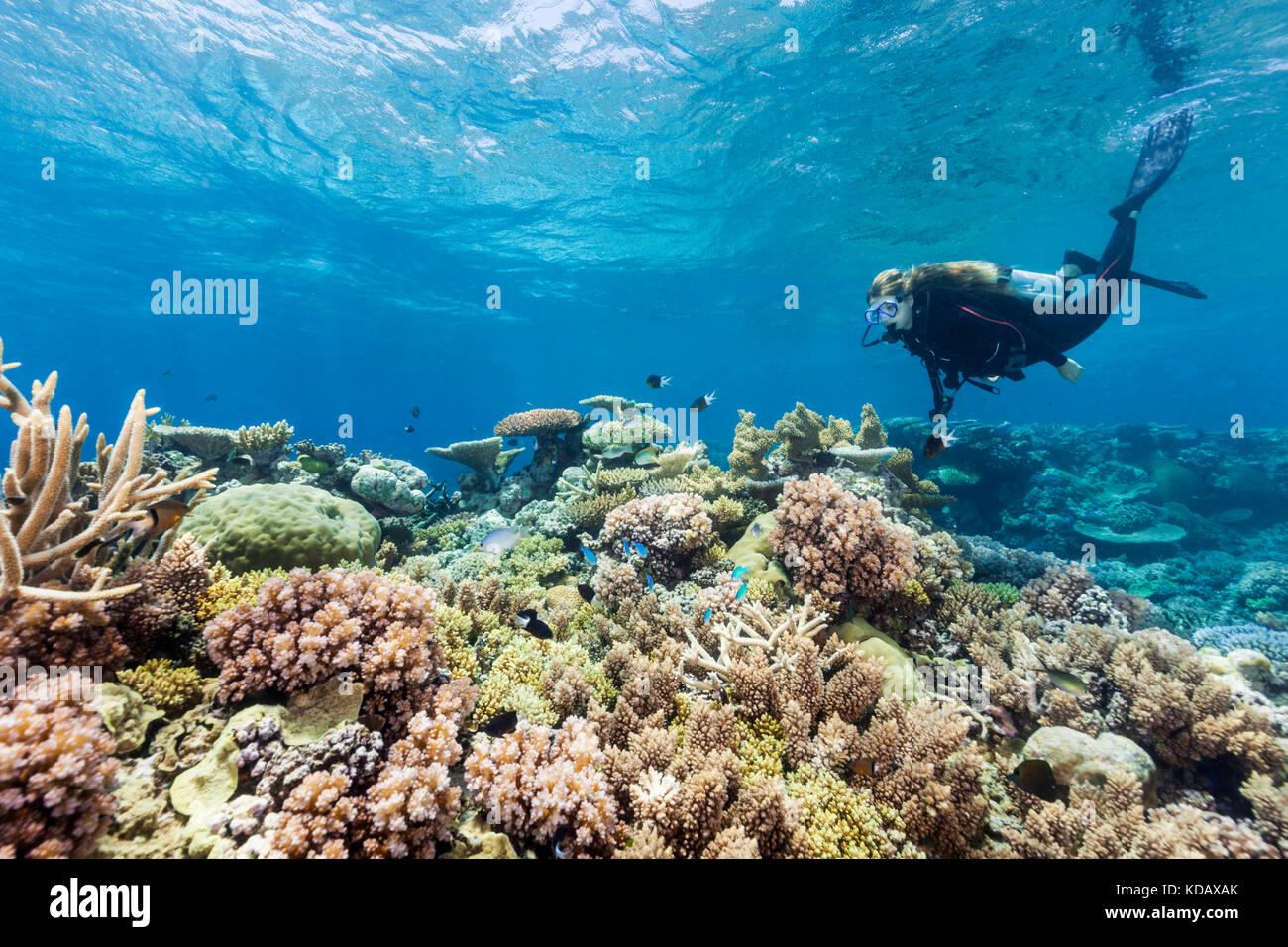 La découverte de la plongée formations de corail d'Agincourt Reef, Great Barrier Reef Marine Park, Photo Stock