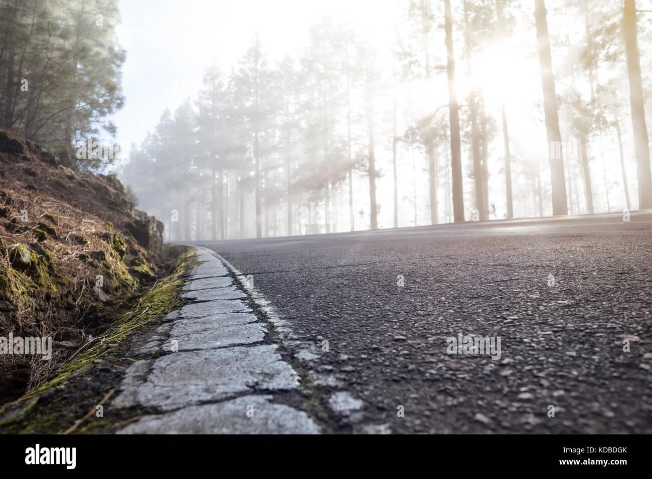 Route avec 12.2005 le marquage routier dans une forêt brumeuse Photo Stock