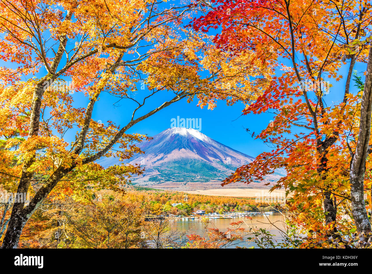 Mt Fuji., Japon, du lac Yamanaka en automne. Photo Stock