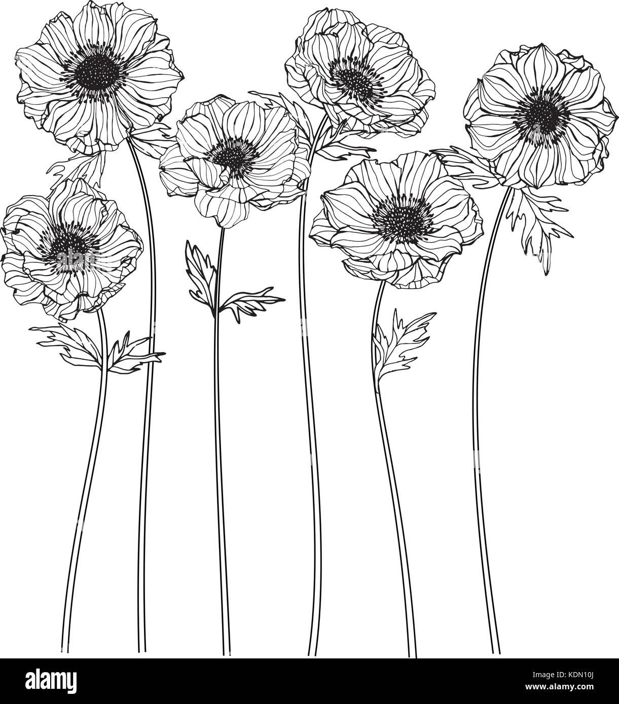Dessin De Fleurs Anémone Illustration Noir Et Blanc Avec