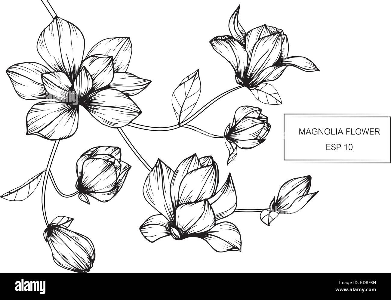 Illustration Dessin Fleur De Magnolia Noir Et Blanc Avec Des