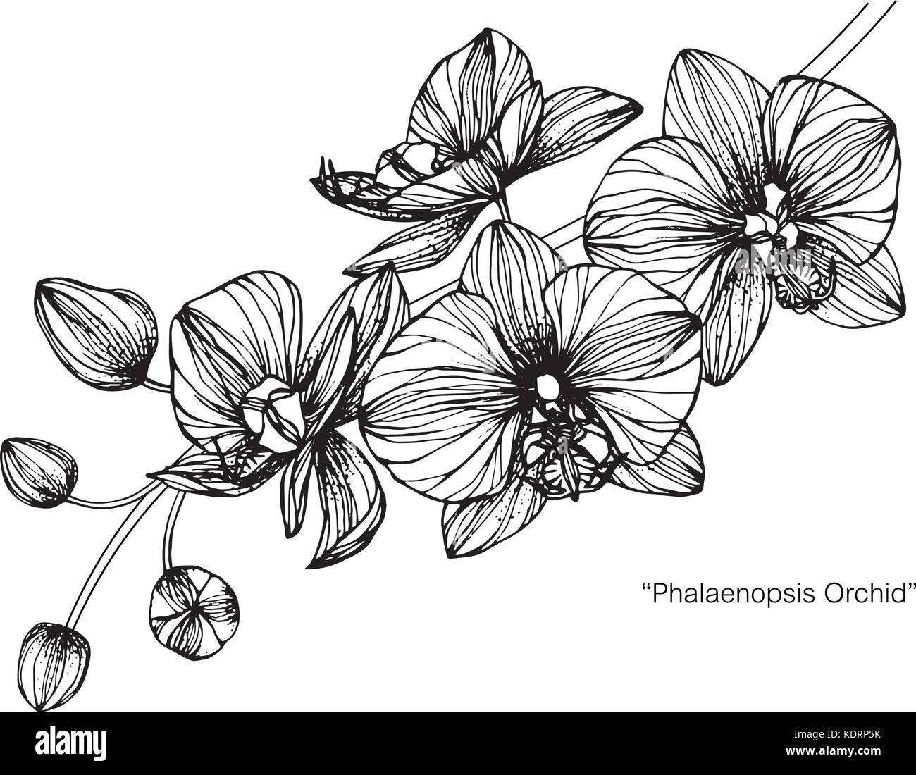 Orchidée Fleur Dessin Illustration Noir Et Blanc Avec Des