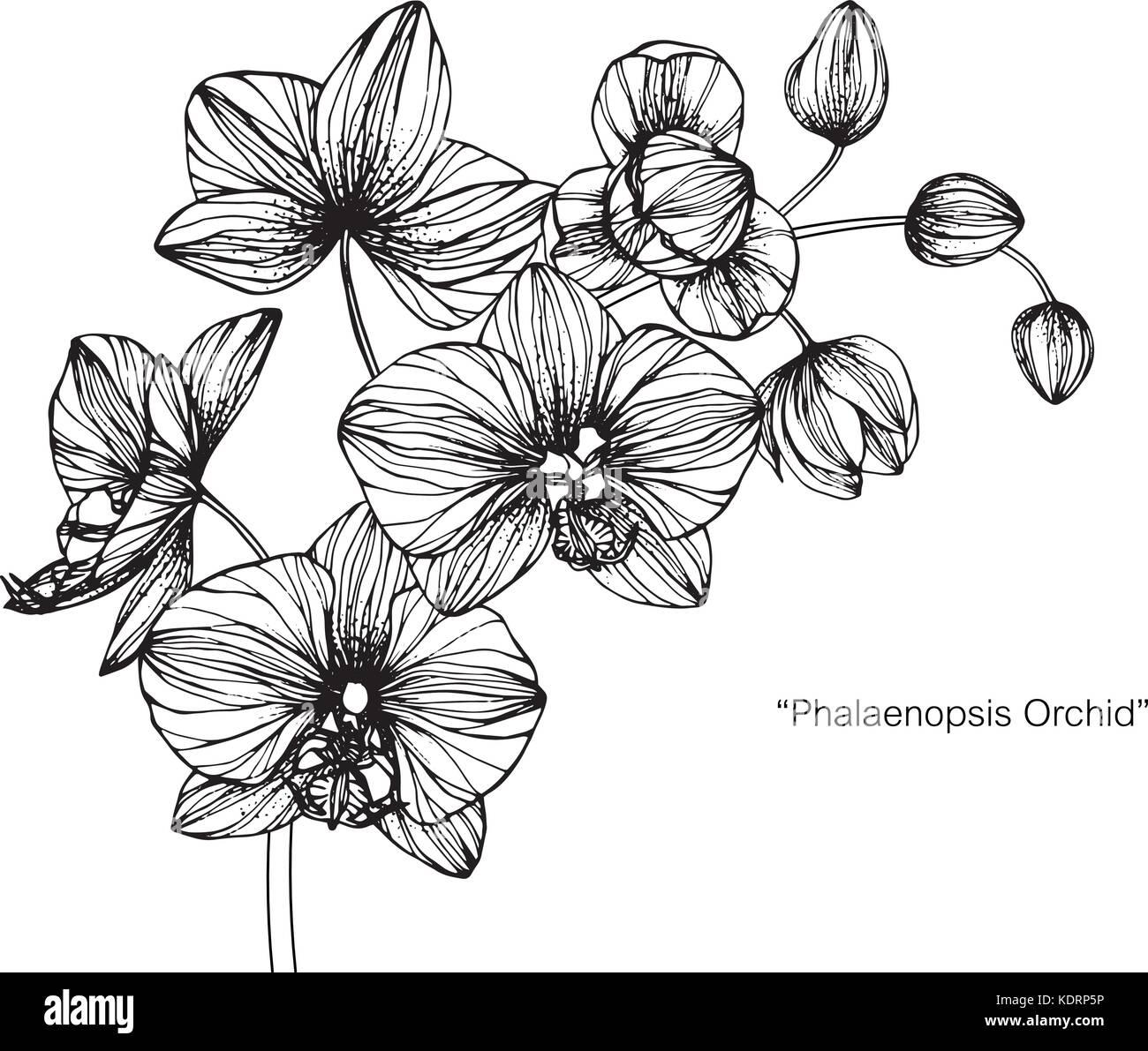 Orchidee Fleur Dessin Illustration Noir Et Blanc Avec Des