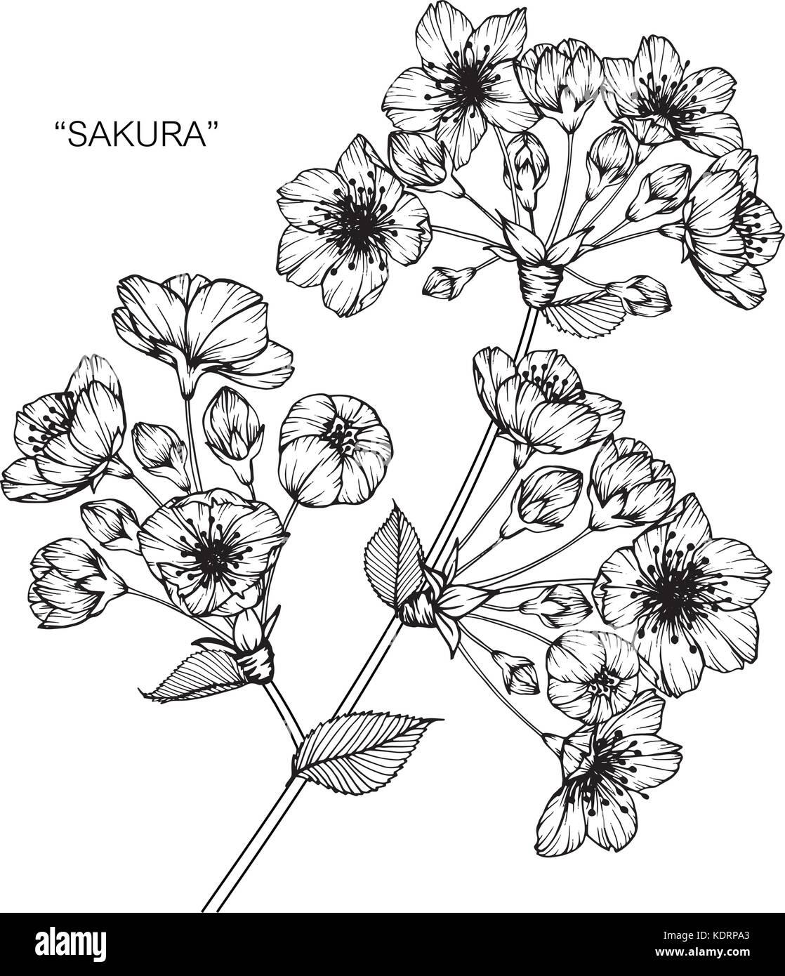 Fleur De Cerisier Dimensions Illustration Noir Et Blanc